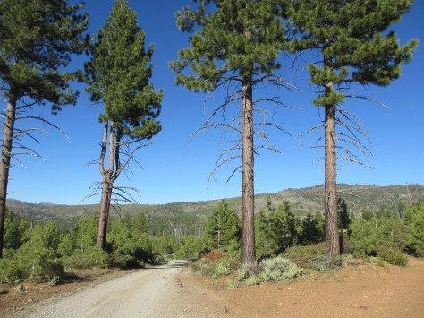 County Road near Bear Valley Campground, Tahoe National Forest