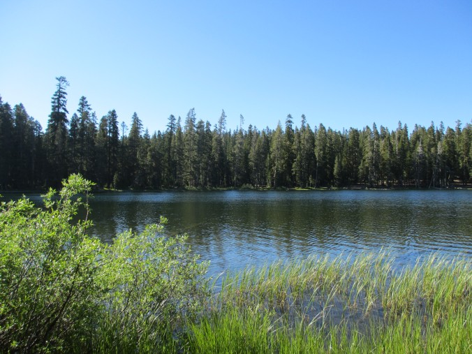 Free Campground, Tahoe National Forest