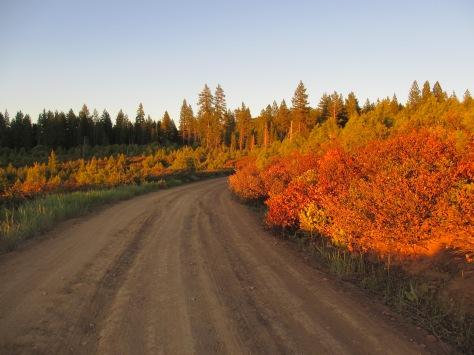 Fall in the Sierra Nevada Range
