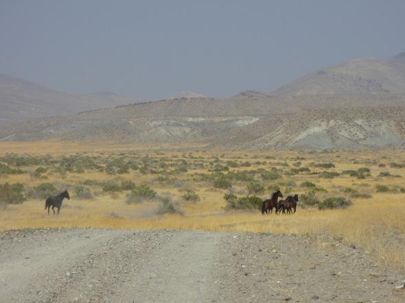 Nevada Mustangs