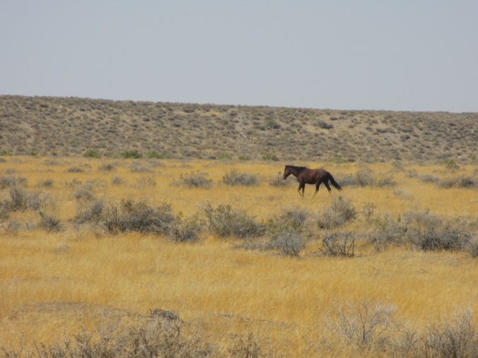 Wild Horse in the Nevada Desert