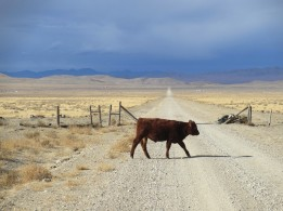 Nevada Desert Road with Cow