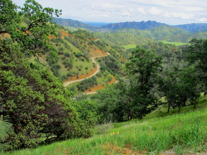 Mendocino National Forest 4