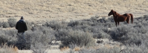 Wild Horse, Nevada Desert 2
