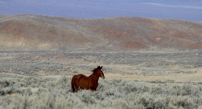 Wild Horse, Nevada Desert